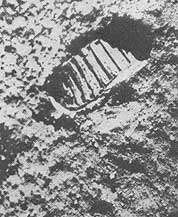 sled-na-lune